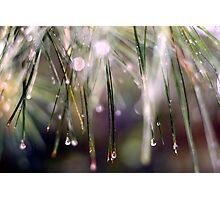 Rainy Day Pine Needles Photographic Print
