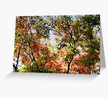 """Changing Leaves""--Autumn in Motion Greeting Card"