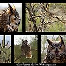 Great Horned Owl ~ Raptor Series by Kimberly Chadwick