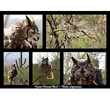 Great Horned Owl ~ Raptor Series Photographic Print