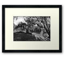 Willow Tree Sunshine Framed Print