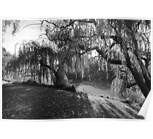 Willow Tree Sunshine Poster