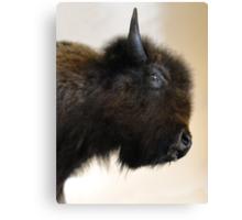 Prairie Bison Canvas Print