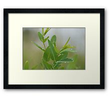 Greenery with morning dew Framed Print