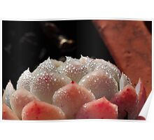Crystallized Cactus Poster