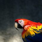 Macaw by TomConger