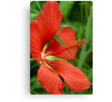 Texas Star(Hibiscus) Canvas Print