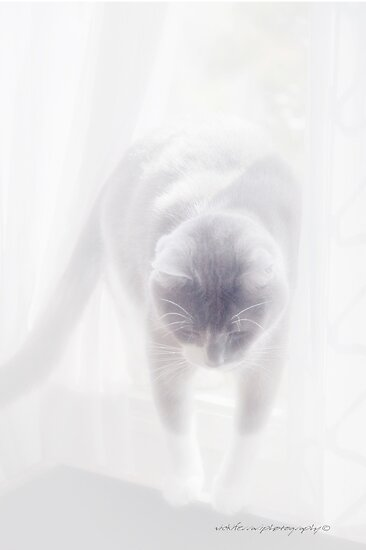 Heavenly Cat © Vicki Ferrari Photography by Vicki Ferrari
