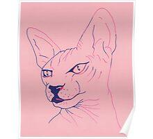 Pink Sphinx Poster