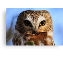 Northern Saw-whet Owl Canvas Print