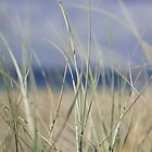 bilinga beach grass by Tim Richardson
