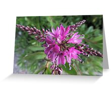 "Symmetry of Pink Flowers - Hebe ""Great Orme"" Greeting Card"