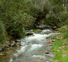 Leather Barrel Creek - Snowy Mountains by David Woolcock