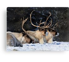 Dasher, Dancer and Prancer, Santa Claus' Reindeers Canvas Print