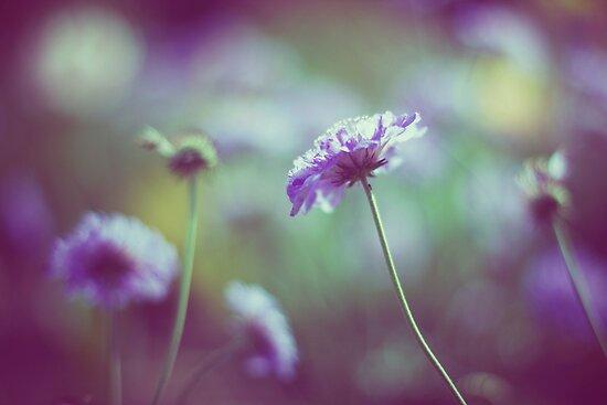 Purple Haze by 17thletter