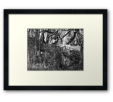 Willow O Willow Framed Print