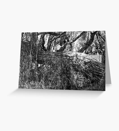 Willow O Willow Greeting Card