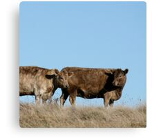 two brown cows Canvas Print