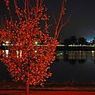 Lake Albert, Night Reflections by bazcelt