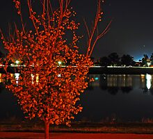 Lake Albert, Night Reflections by bazcelt