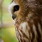 Owls - Silent Hunters 2 by Owl-Images