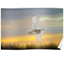 Sunset Snowy In Flight Poster
