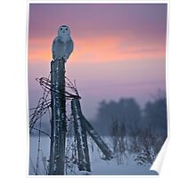 Sunset Snowy Poster