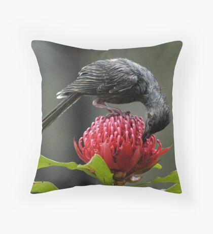 wattle bird, waratah 30-10-05 #1 Throw Pillow