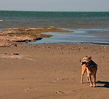 Atlantic Sam by SamTheCowdog