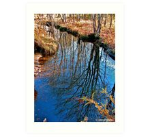 Reflections of a Tree Art Print