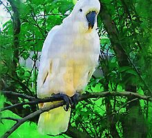Hello- Aussie Bird by snowkittin