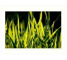 Leaves of Grass (for Walt Whitman) Art Print