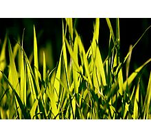 Leaves of Grass (for Walt Whitman) Photographic Print