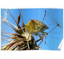 Leaf Hopper: Hemiptera Poster