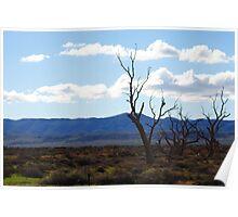 Willochra, South Australia Poster