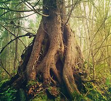 Old Growth by Kimberley Bruce