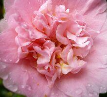 Camellia 1 by beeden