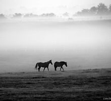 Companionship - misty morning horses by John Carey