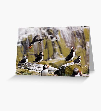 Puffin Party Greeting Card