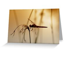 PEACEFUL EVENING Greeting Card