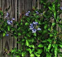 Textures of Spring by Noble Upchurch