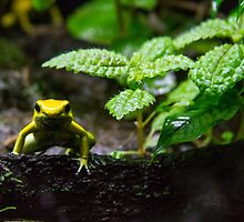 I'm frog. Who are you? by Gabriele Maurus