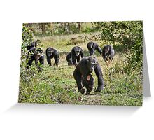 running group of common Chimpanzees Greeting Card