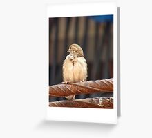 Hanging Out Greeting Card
