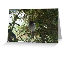 scrub jays Greeting Card