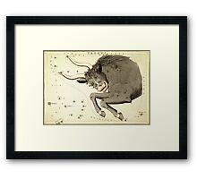 Zodiac Signs: Taurus Framed Print