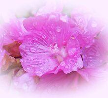 Posh Pink by sarnia2