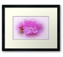 Posh Pink Framed Print