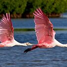 Two Spoonbills in Flight by Karen  Moore