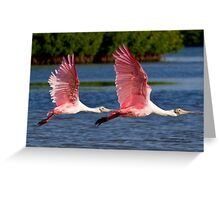 Two Spoonbills in Flight Greeting Card